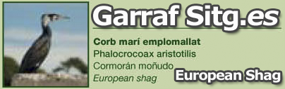 costa-garaff-European-Shag