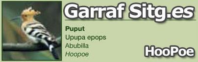 costa-garaff-HooPoe