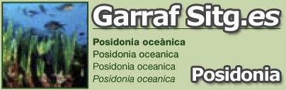 costa-garaff-Posidonia