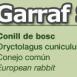 costa-garaffRabbit
