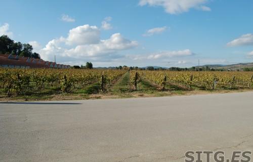 Sitges-Cava-Tour-212