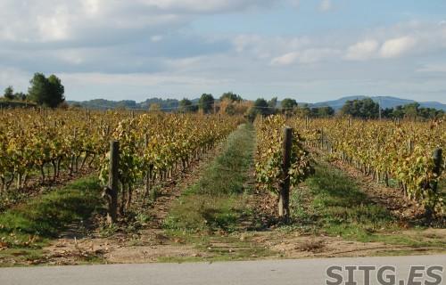Sitges-Cava-Tour-213