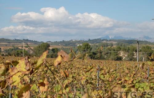 Sitges-Cava-Tour-215