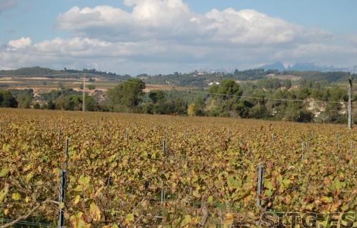 Sitges-Cava-Tour-216