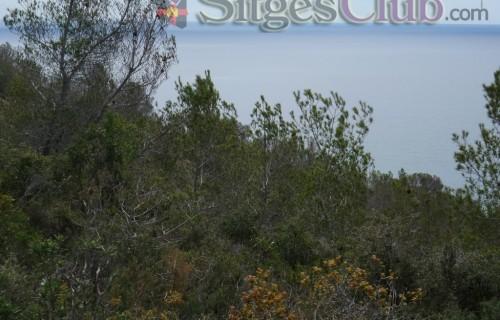 Sitges-club-trek-garraf041
